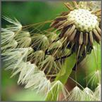 Homöopathie für Menschen
